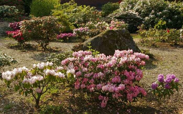 Рододендроновый парк-Westerstede Rhododendronpark. 21820