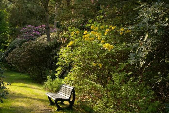 Рододендроновый парк-Westerstede Rhododendronpark. 24577