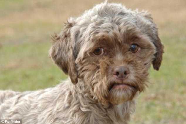 тоник собака с человеческим лицом фото 1 (634x421, 20Kb)