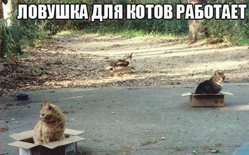 1362085454_lovushka_dlya_kotov (491x307, 46Kb)