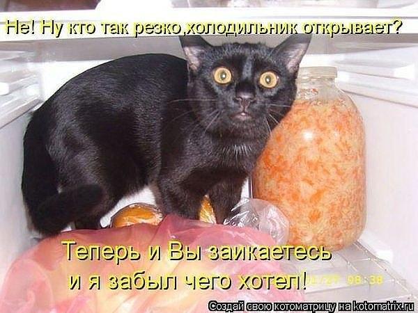 1362086093_kotye (600x450, 64Kb)