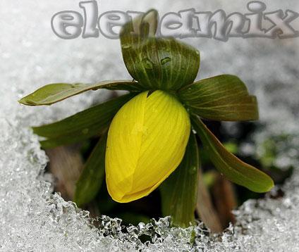 весенний цветок/4348076_08 (424x358, 39Kb)