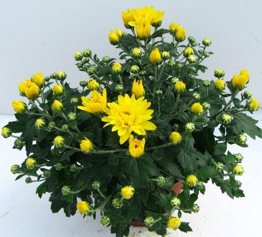 удобрения для комнатных растений для лучшего цветения