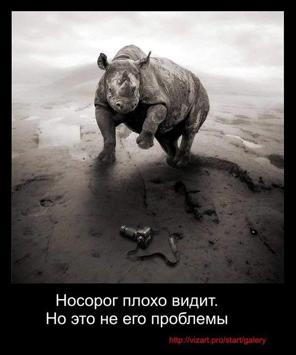 3855635_nosorog_a (583x700, 84Kb)