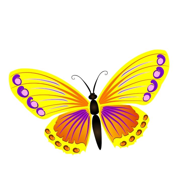 картинки бабочки яркие