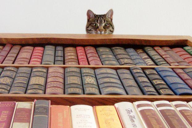 catbook (622x414, 46Kb)