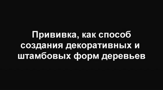 Безымянный23 (560x311, 38Kb)