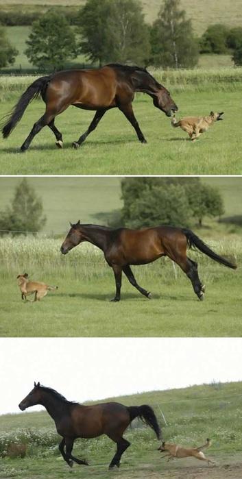 dog_horse_04 (353x700, 81Kb)