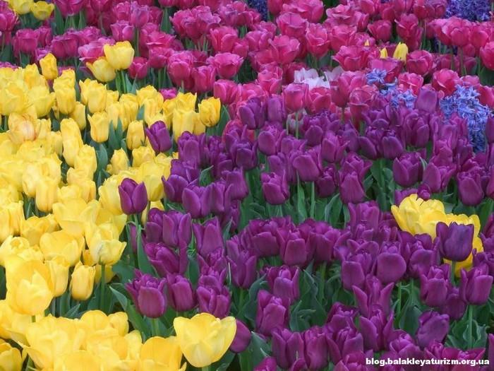 Цветы (700x525, 123Kb)