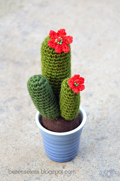 Кактусы, которые цветут