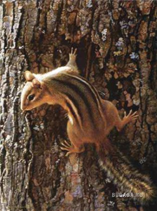 1257955750_narrow_escape_chipmunk_by_carl_brenders (313x420, 40Kb)