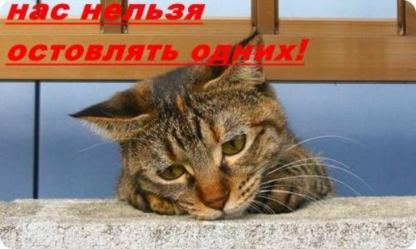 кот. jpg (600x360, 39Kb)