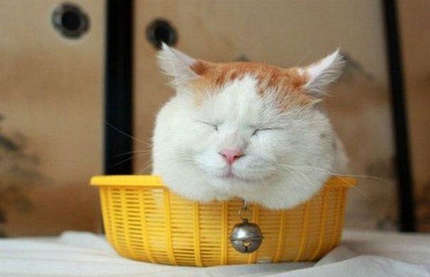 смешные фото кошек (604x389, 34Kb)