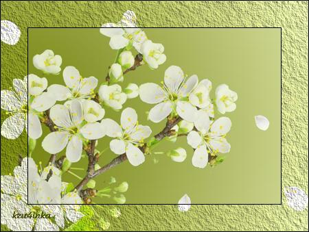 Ветка-вишни (450x339, 275Kb)