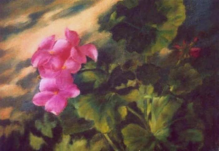 geranium-bloom2-copy (700x482, 63Kb)