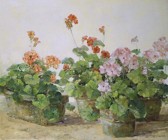 sally_swatland_s1154_patio_geraniums (540x450, 71Kb)