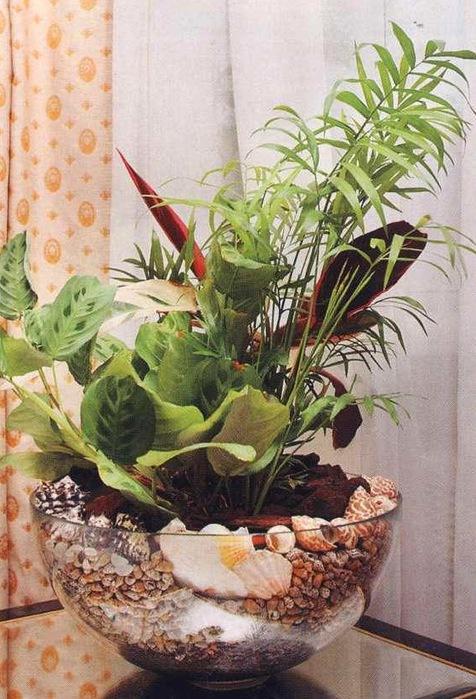 Какие цветы можно посадить в один горшок