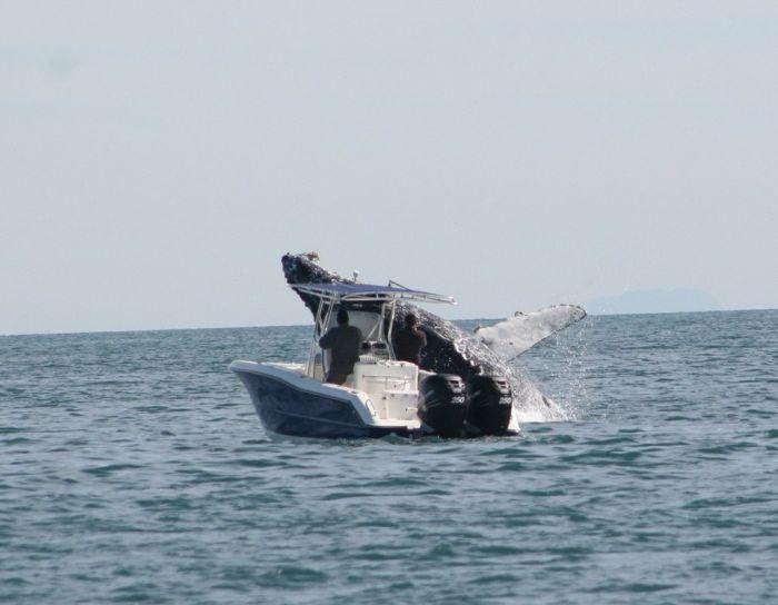 кит налетел на лодку фото (700x544, 39Kb)