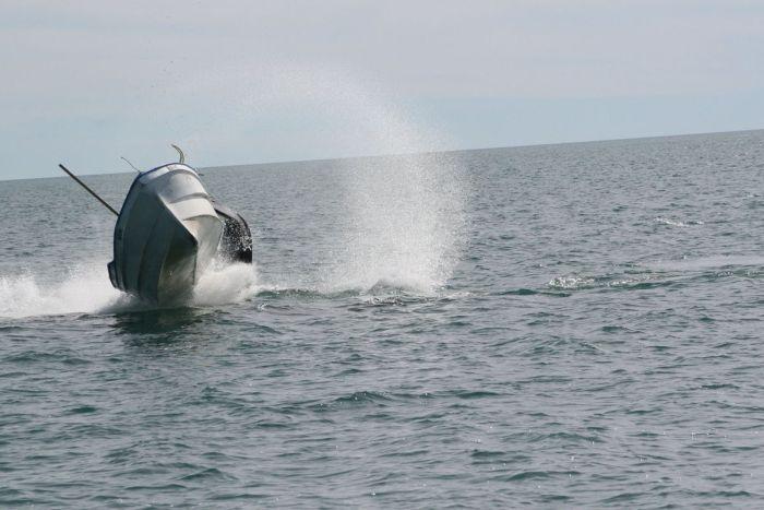 кит налетел на лодку фото 2 (700x467, 49Kb)