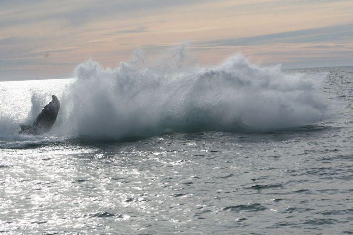 кит налетел на лодку фото 4 (700x467, 49Kb)