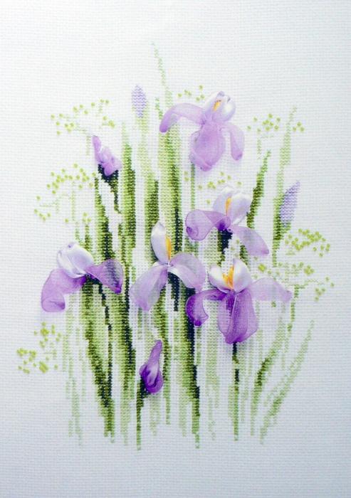 Stitchart-vesennie-irisy0 (493x700, 148Kb)