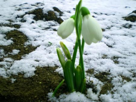 Весна 8 (450x338, 53Kb)