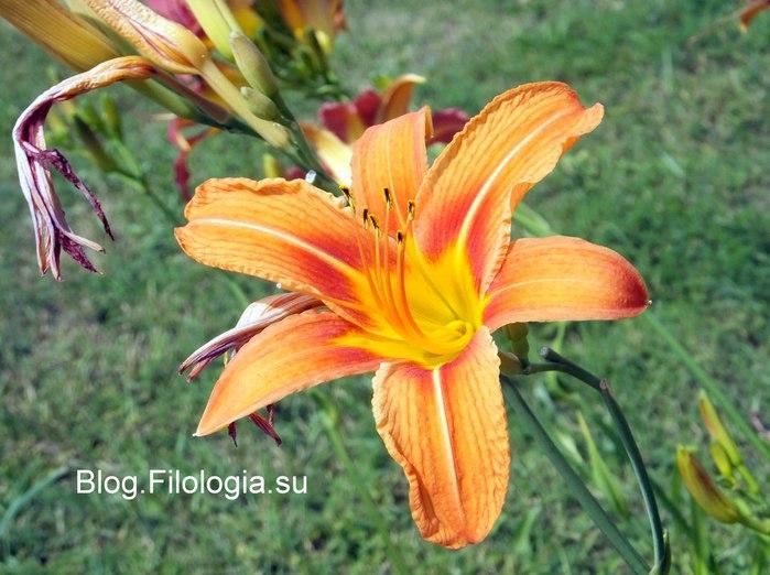 Цветы крупным планом с тычинками/3241858_Zverty7 (700x522, 85Kb)