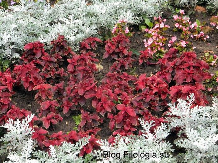 Красочные цветы на поляне/3241858_Zverty9 (700x525, 160Kb)