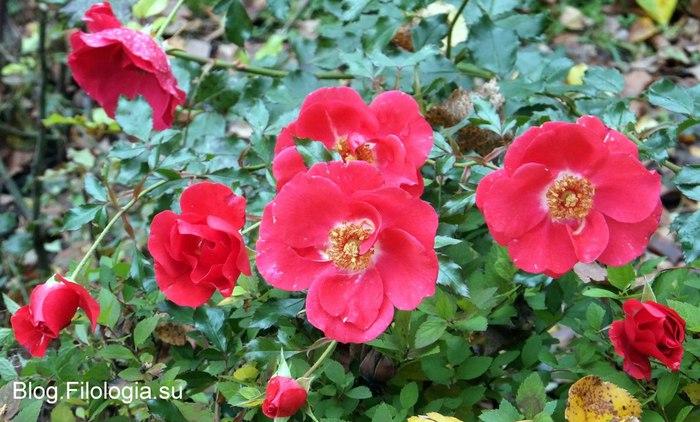 Ярко-крвсные цветы к 8 марта /3241858_Zverty11 (700x422, 91Kb)
