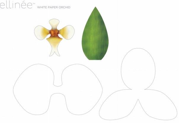 Схемы орхидеи из бумаги