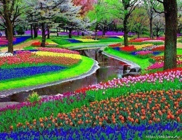 яркие краски мира Парк Keukenhof неподалеку от Амстердама, Нидерланды (604x466, 305Kb)