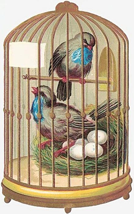 scrap_birdcage2 (438x700, 132Kb)