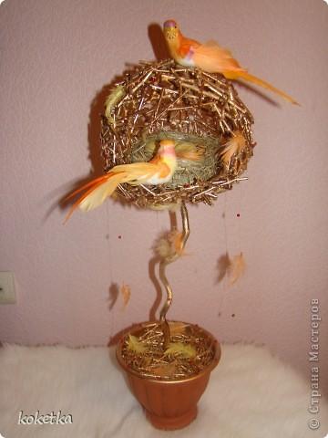 топиарии птичьи гнезда (1) (360x480, 41Kb)