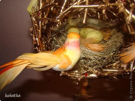 топиарии птичьи гнезда (3) (520x390, 66Kb)