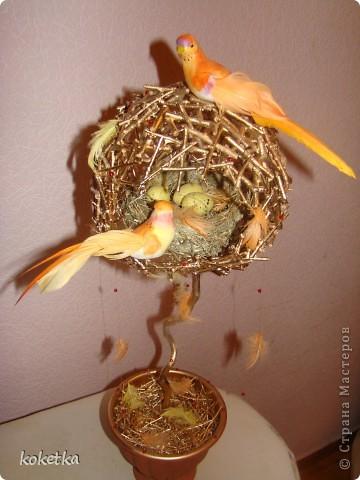топиарии птичьи гнезда (9) (360x480, 48Kb)