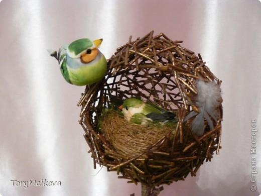 топиарии птичьи гнезда (18) (520x390, 47Kb)
