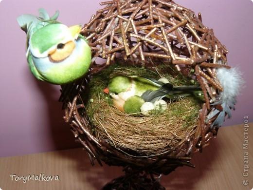 топиарии птичьи гнезда (20) (520x390, 63Kb)