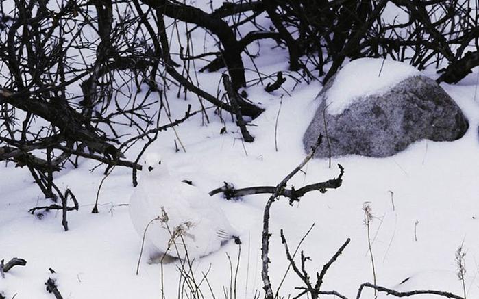 маскировка Арт Вульф фото 5 (700x437, 245Kb)