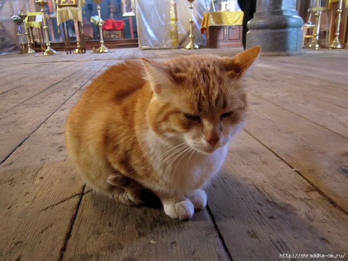 Котик монастырский рыжий. 1 (700x525, 271Kb)