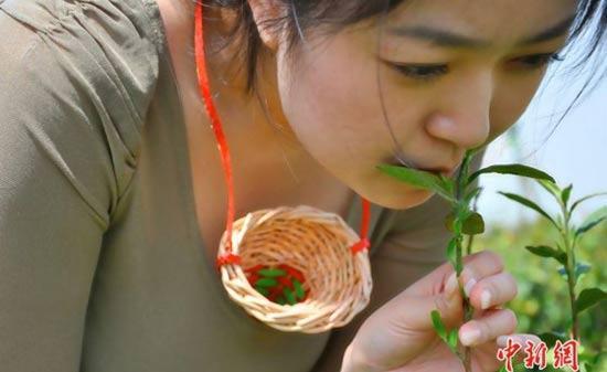 Чай, собранный губами девственниц 98355521 kouchuncha