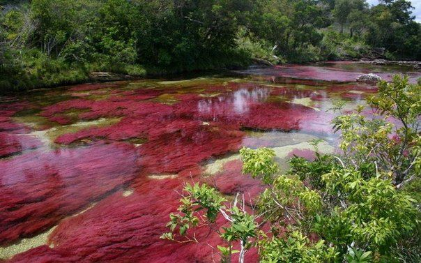 Каньо Кристалес - самая красивая река в мире, Колумбия (604x377, 65Kb)