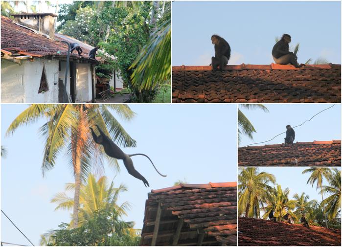 2012 05 SriLanka25 (700x505, 491Kb)
