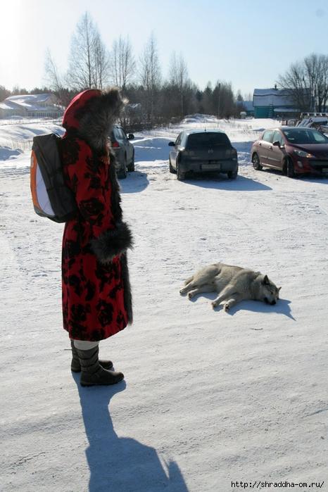 суровые северные собаки, 1 (466x700, 258Kb)