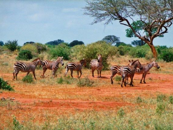 kenya_safari (568x426, 54Kb)