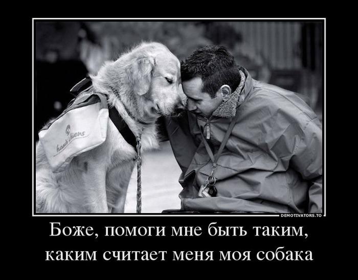 Жаль, что люди не ведут себя как собаки...