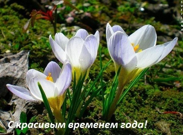 весна цветок пр1 (600x443, 109Kb)