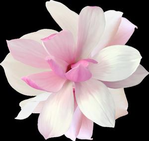 Изменение размера большой цветок (300x284, 78Kb)