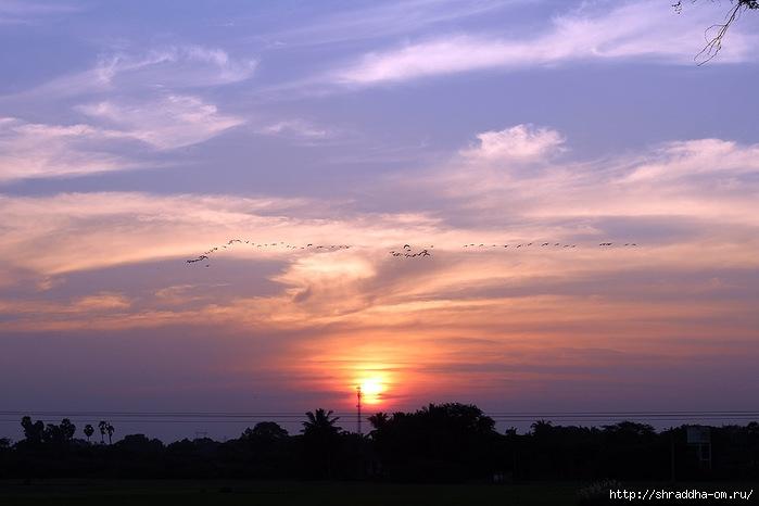 Индия, штат Тамилнад, Птичий заповедник, 42 (700x466, 138Kb)