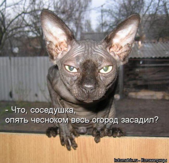 cm_20130301_02509_003 (650x627, 69Kb)