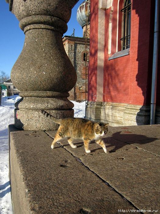 Котик из Старой Ладоги, 2 (525x700, 397Kb)